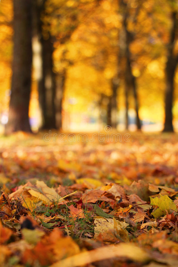 Fall into colors stock photography