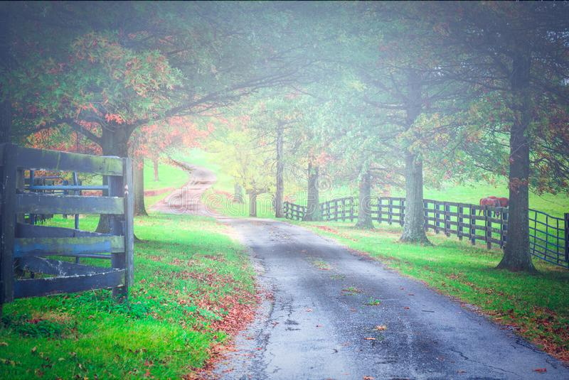 Fall colors outside of Louisville Kentucky. A driveway winds through the country side along horse farms in the fall in Kentucky royalty free stock photos