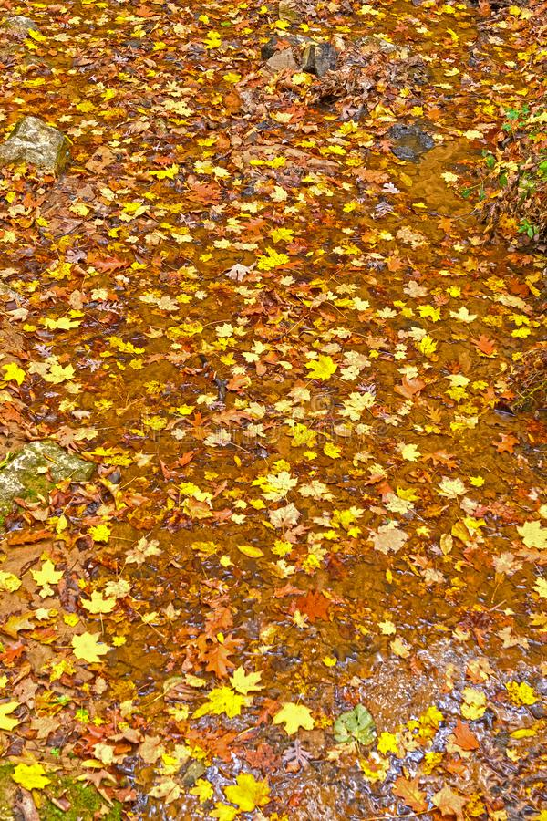 Fall Colors in a Quiet Creek royalty free stock photography