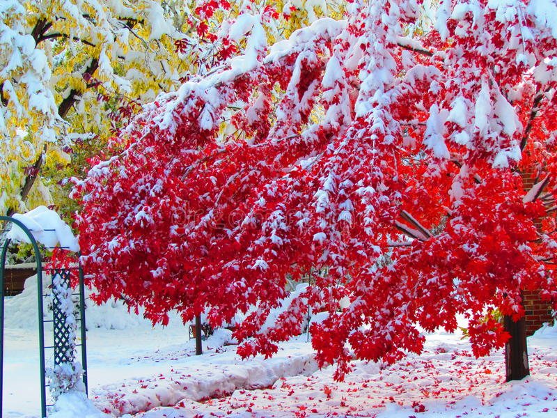 Fall Colors and Snow stock photography