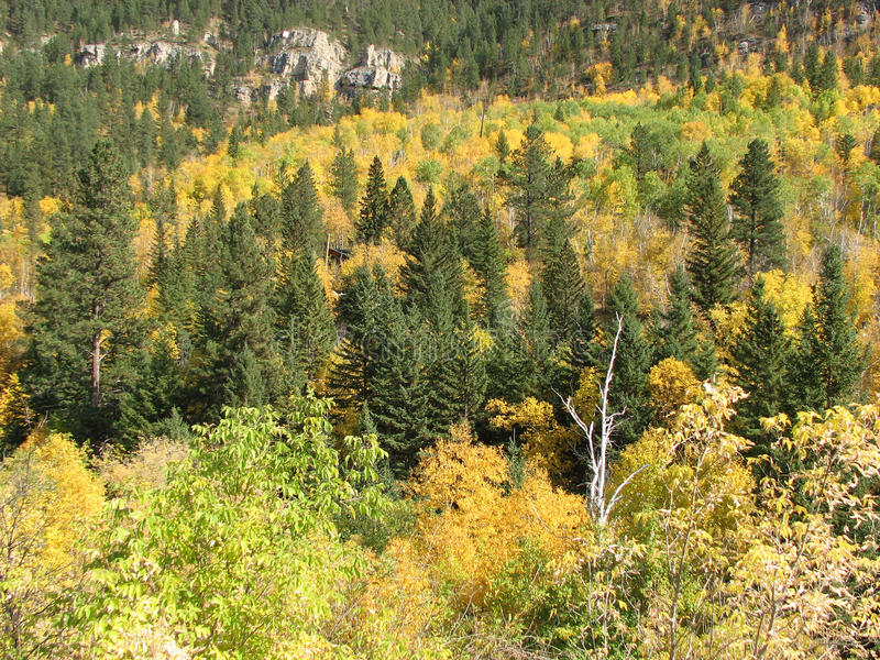 Fall Colors Spearfish Canyon stock image