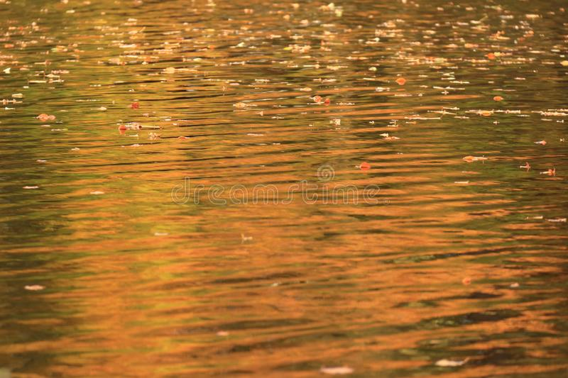 Fall colors in wrinkeled water with leaves stock image