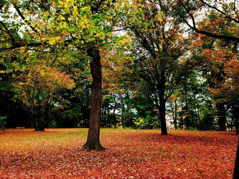 Fall colour stock photo