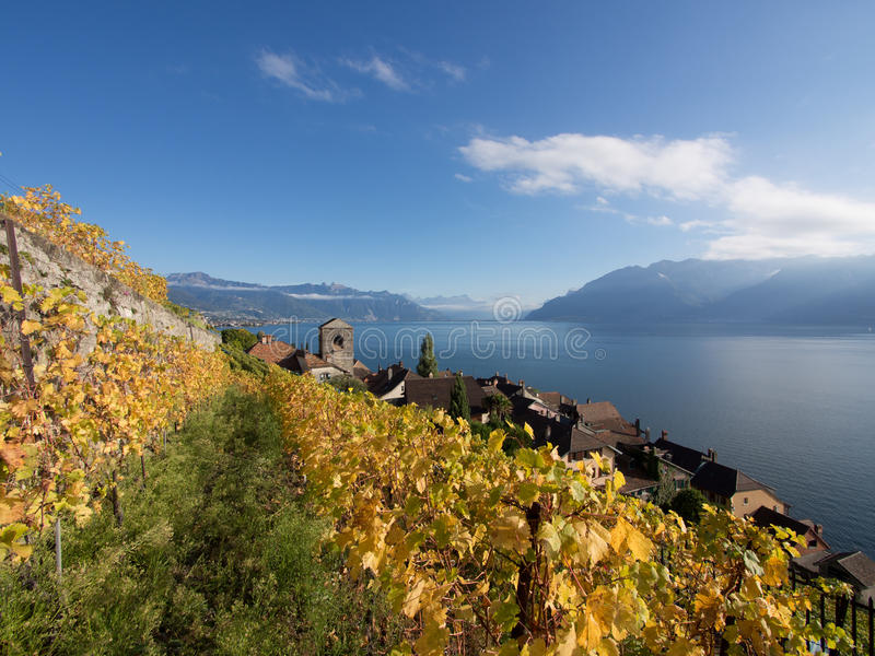 Fall Colours at Saint-Saphorin in Lavaux in Switze. The northen hillside of Lake Geneva (Lake Leman), Switzerland, between Lausanne and Montreux is covered in stock photo