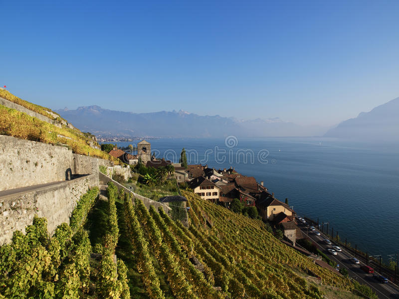 Fall Colours at Saint-Saphorin. The northen hillside of Lake Geneva (Lake Leman), Switzerland, between Lausanne and Montreux is covered in scenic vineyards, all royalty free stock photos