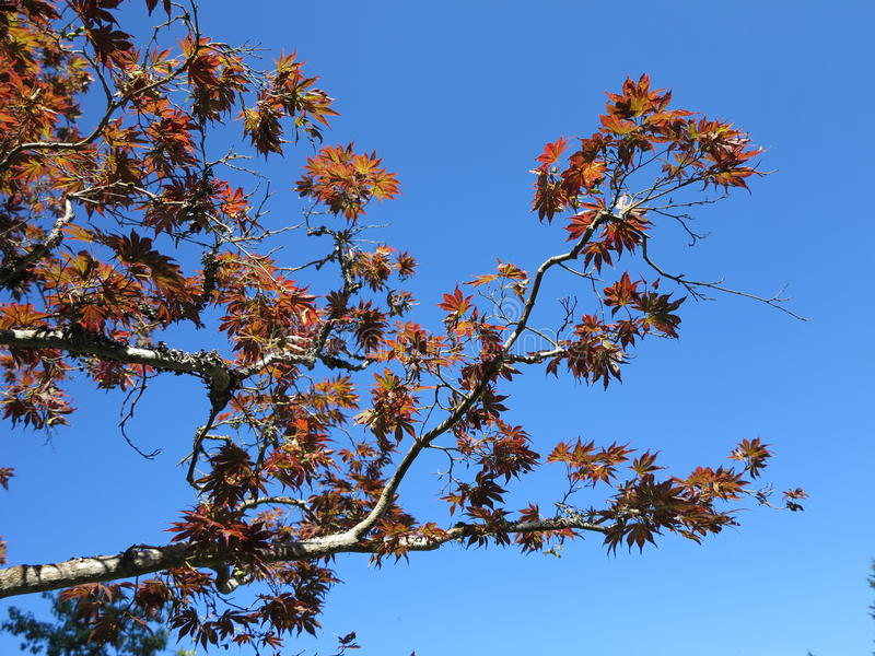 Fall is coming. These leaves turns brown as the fall is coming royalty free stock images