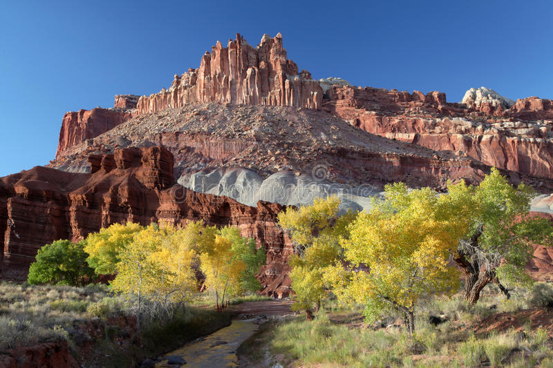 Fall Cotton Wood Trees, Capital Reef NP stock photo
