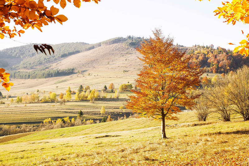 Fall Countryside Landscape with Colorful Trees and Meadows. Vibrant Fall Landscape in the Countryside with Colorful Trees and Meadows royalty free stock photo