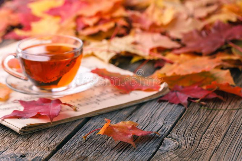 Fall creative art concept, maple leaves on table royalty free stock images