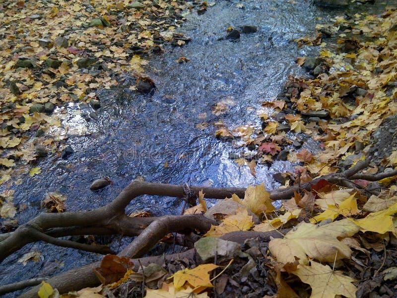 Fall Creek royalty free stock photos