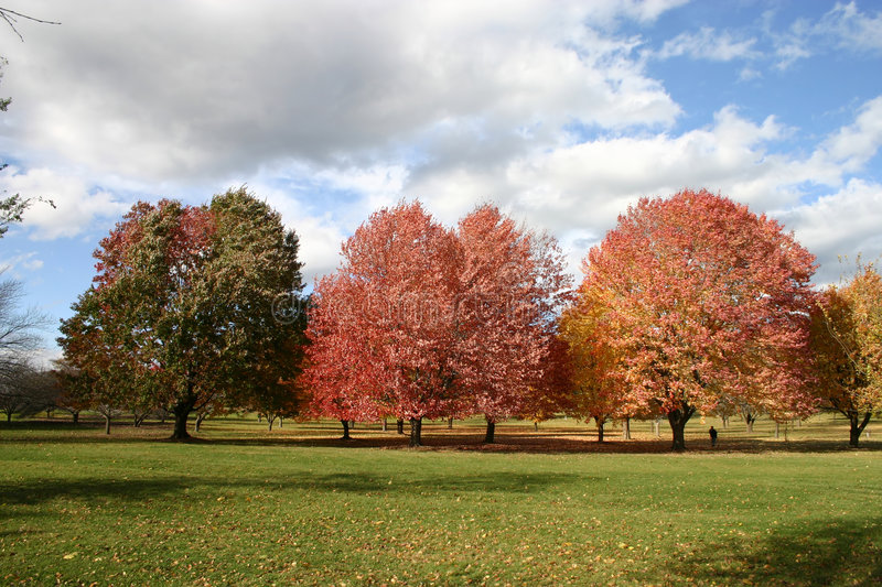 Fall Day royalty free stock image
