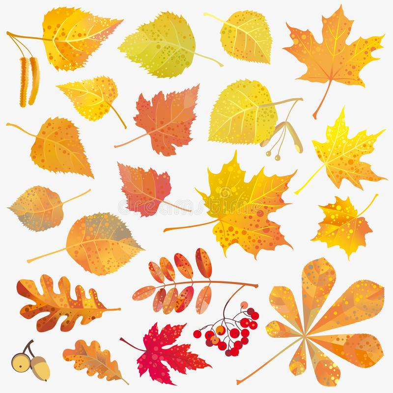 Fall Leaves Collection. Fall decor leaves collection isolated on white. Autumn. Vector illustration stock illustration