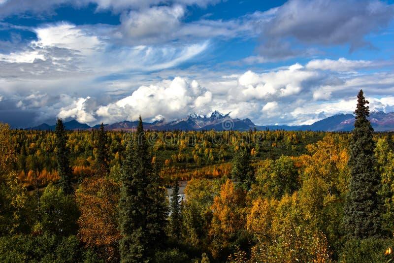 Fall in Denali stock images
