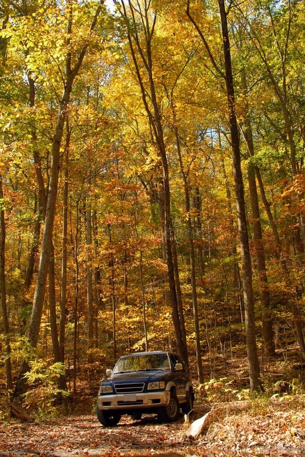 Download Fall Drive stock image. Image of trooper, season, trees - 26880997