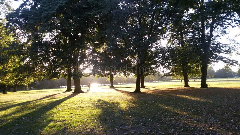 Fall in England - sunrise royalty free stock images