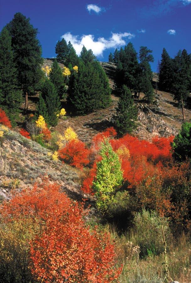 Fall färbt Fairfield, Idaho stockfotografie