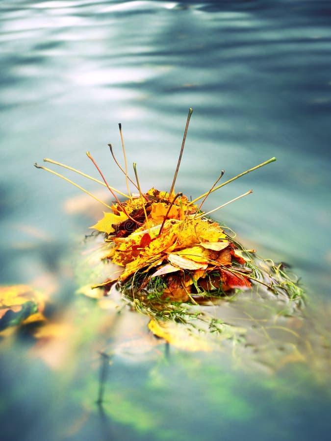 Fall färbte das Blatt, das auf einem Stein mit Wasser stillsteht, das um ihn fließt lizenzfreies stockbild