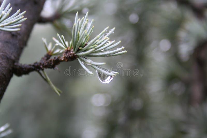 Download Fall för 2 droppe arkivfoto. Bild av vatten, fall, green - 521238