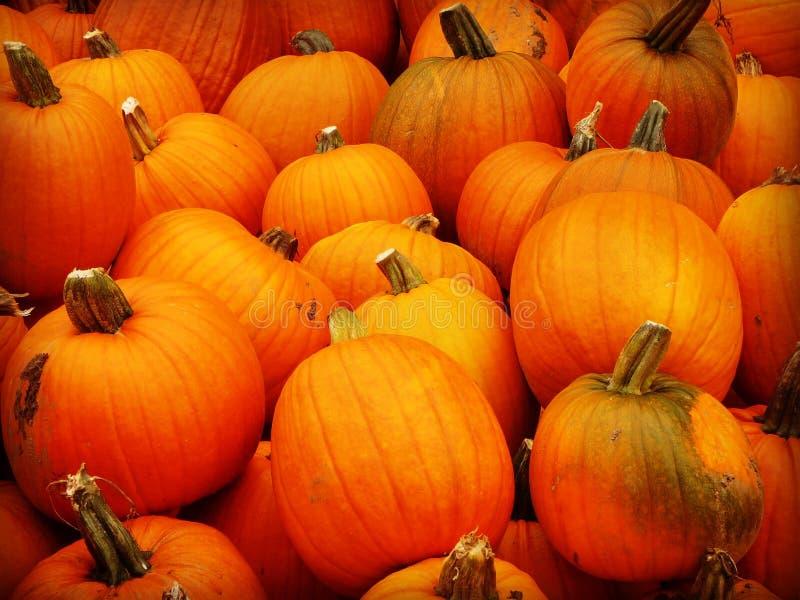 Fall Fair pumpkin stock images
