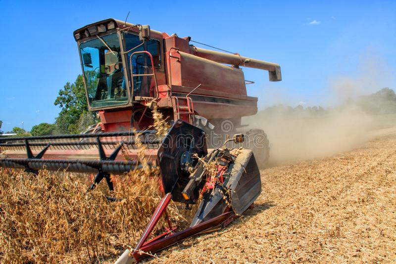 A soybean harvestor at work on a family farm in Louisiana. royalty free stock photo