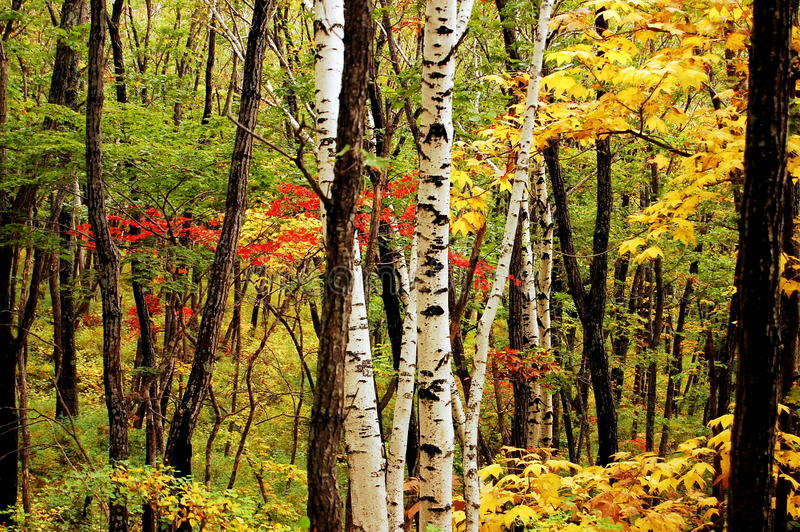 Fall at the Far East Russia stock image
