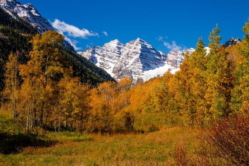 Fall-Farbe in Aspen Colorado lizenzfreie stockfotografie