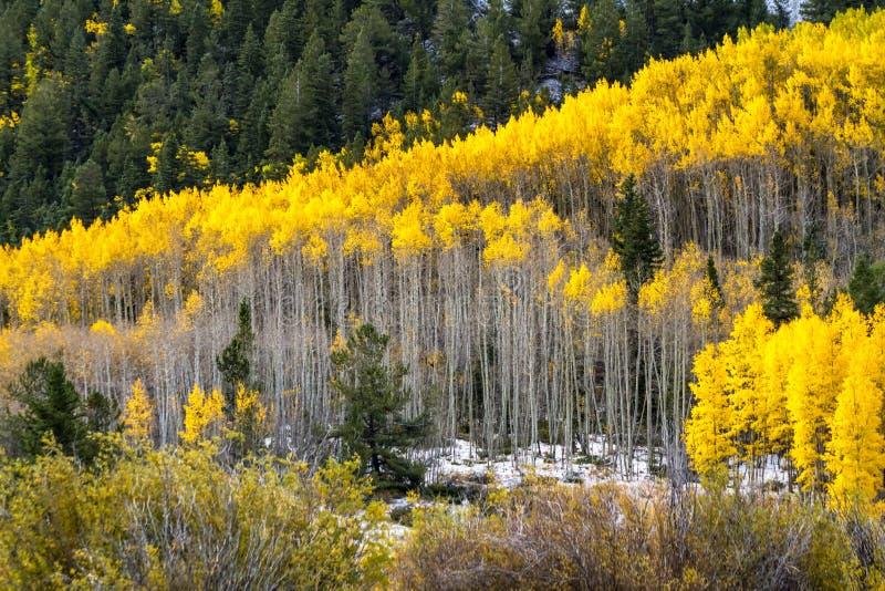 Fall-Farbe und Schnee in Colorado stockbilder