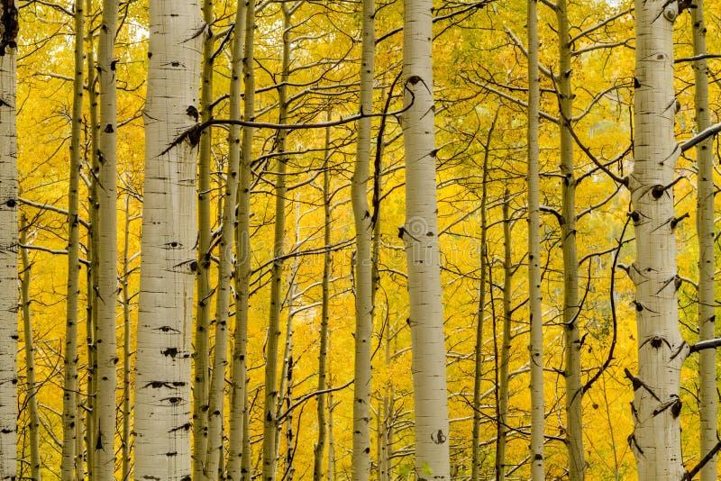 Fall-Farbe und Schnee in Colorado lizenzfreies stockfoto