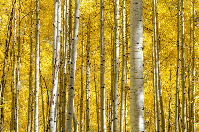 Fall-Farben in Colorado-Bergen lizenzfreies stockbild