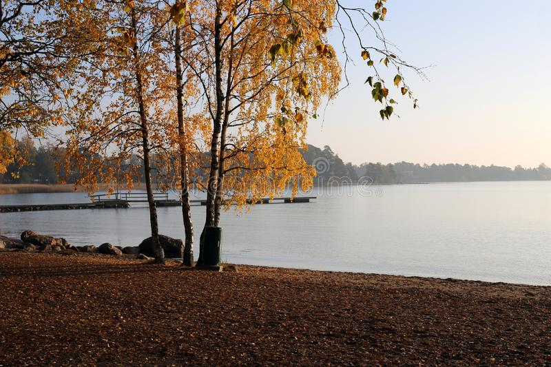Fall in Finland - Trees with Yellow Fall Leaves by the Baltic Sea During a Sunset in Espoo, Finland stock photography
