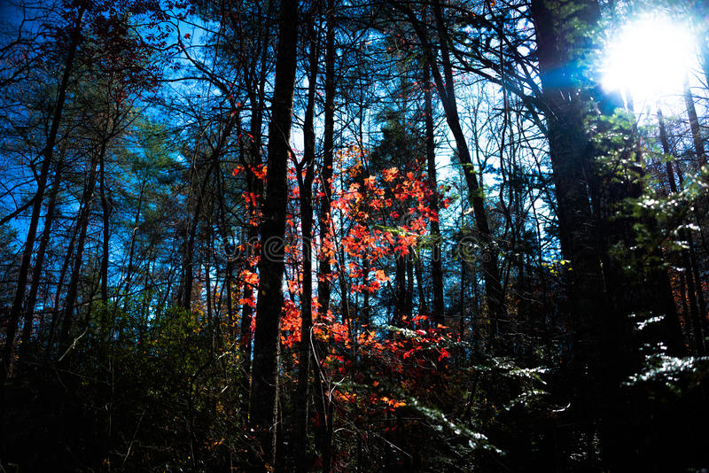 Download Fall Fire Stock Photo - Image: 83715160
