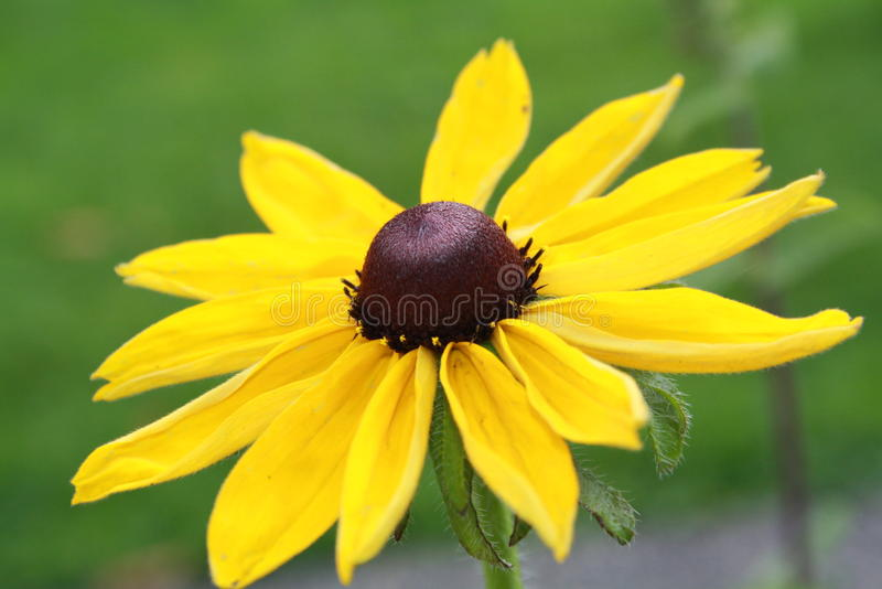 Fall Flower stock image