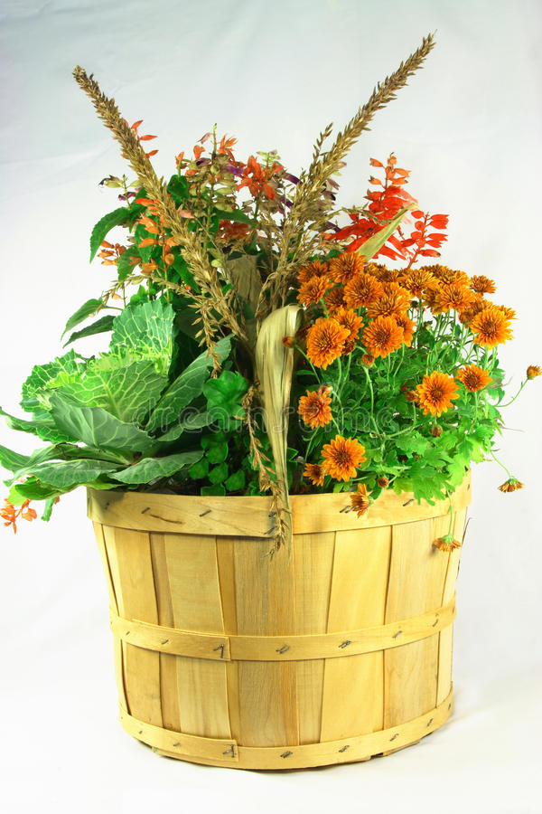 Download Fall flowers bouquet. stock image. Image of wooden, green - 11250633