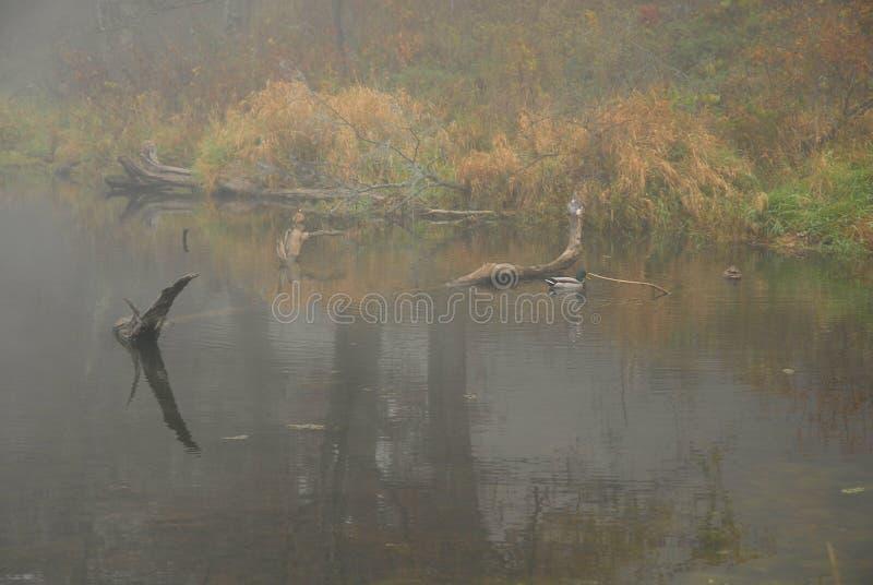 Fall Fog stock image