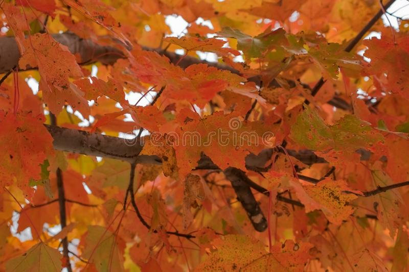 Fall Foilage in October. Asheville Fall Foilage in October stock photography