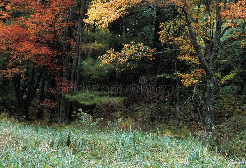 Fall Foilage at Woods Edge. Pawtuckaway Park, Nottingham County, New Hampshire stock photo