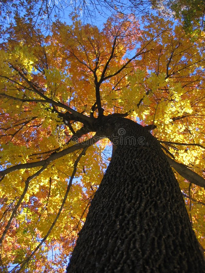 Free Fall Foliage Stock Photo - 1170410