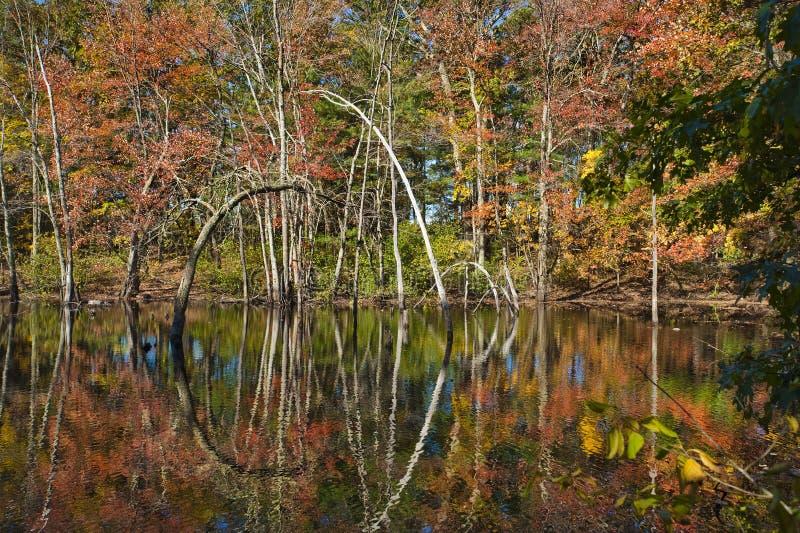Download Fall foliage stock photo. Image of green, lake, fall - 21689480