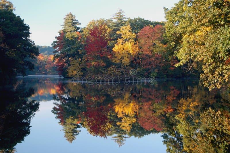 Fall Foliage stock photography