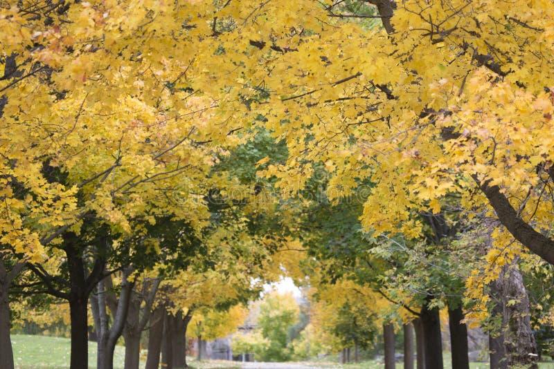 Fall Foliage royalty free stock photography