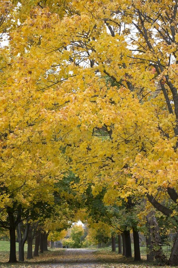 Fall Foliage stock images