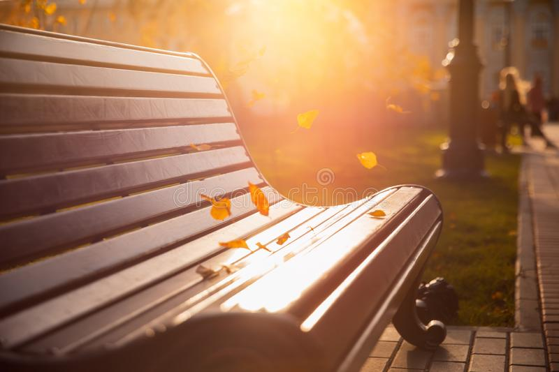 Fall foliage on bench in autumn park, sunlight and wind pick up yellow leaves. Concept change season royalty free stock photo