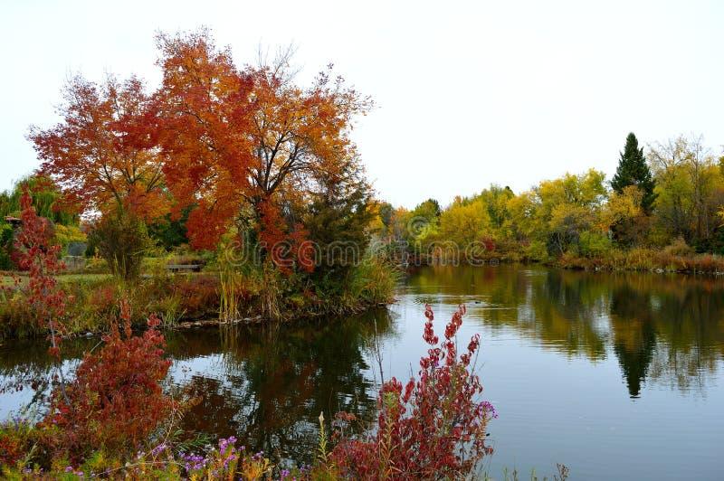 Download Fall Foliage Boise Idaho Albertson Park Stock Image - Image of idaho, bright: 103639549