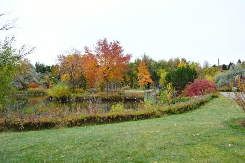 Download Fall Foliage Boise Idaho Albertson Park Stock Photo - Image of flowers, bright: 103639480
