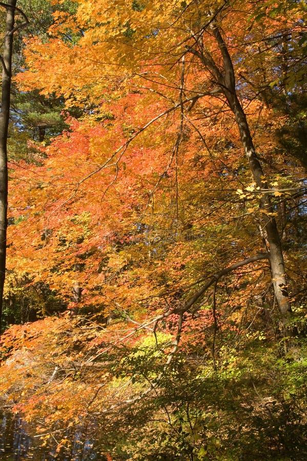 Fall foliage at Borderland State Park royalty free stock photo