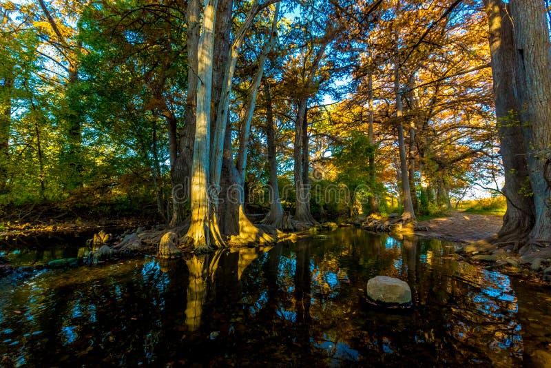 Fall Foliage on Cibolo Creek, Texas. stock images
