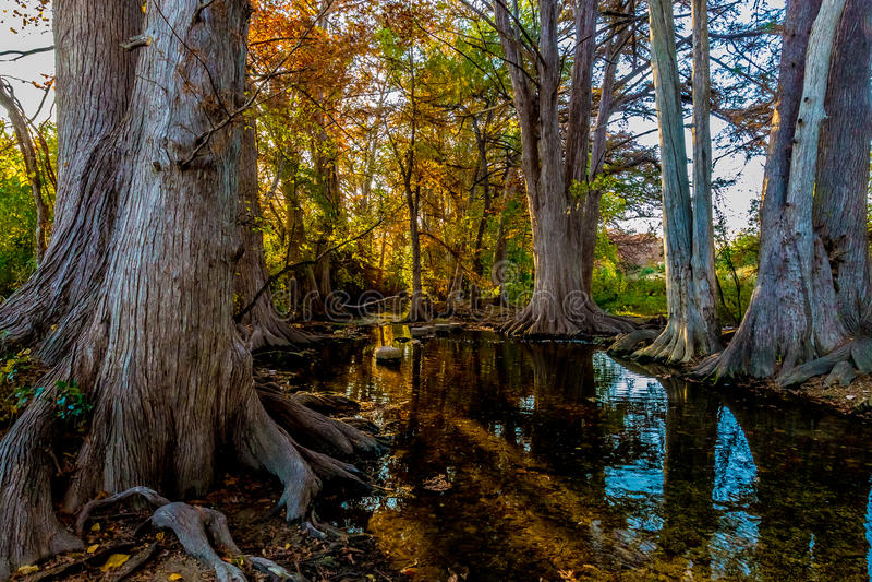 Fall Foliage on Cibolo Creek, Texas. Sunrise on Cypress Fall Foliage on Cibolo Creek, Texas royalty free stock photography