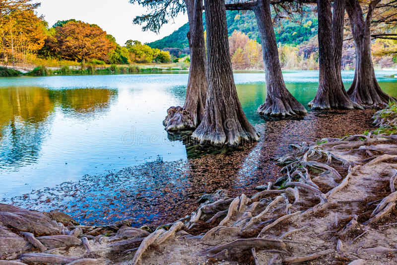 Fall foliage on the crystal clear Frio River in Texas. Fall Foliage from Trees Lining the Crystal Clear Frio River Floating Near the Gnarly Roots in the River royalty free stock photo