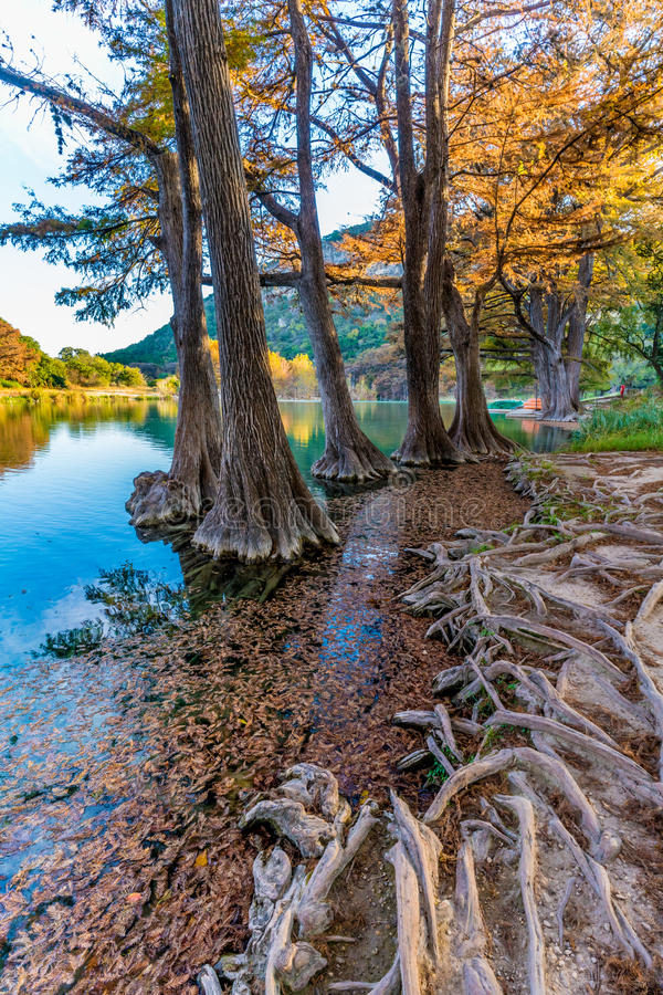 Fall foliage on the crystal clear Frio River in Texas. Fall Foliage on Trees Lining the Crystal Clear Frio River at Garner State Park, Texas royalty free stock image