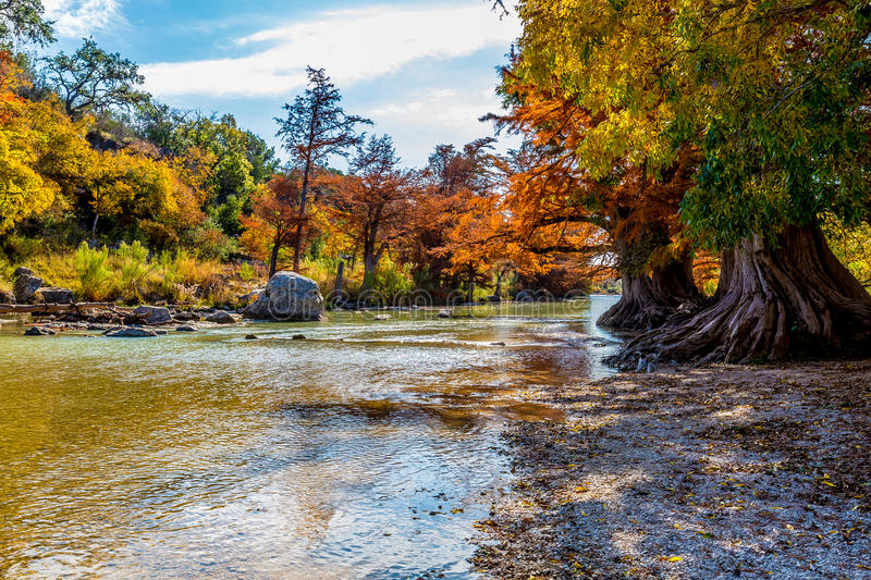 Fall Foliage at Guadalupe State Park, Texas. Fall Foliage on Bald Cypress Trees on the Guadalupe River at Guadalupe State Park, Texas stock images